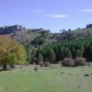 phoca_thumb_l_cortijo-del-malojal