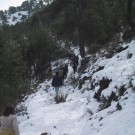 phoca_thumb_l_senda-en-la-nieve
