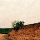 arboles-singulares_01