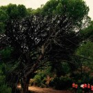arboles-singulares_05