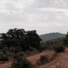arboles-singulares_13