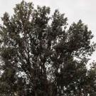 arboles-singulares_14