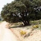 ruta-8-nerpio-castillo-del-taibilla-por-solana-de-las-covachas-5